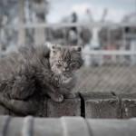 Katinas murklys konteineri saugojo
