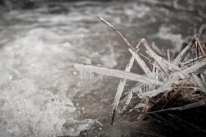 Ledas ant žolių