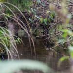 Lietuviškos džiunglės