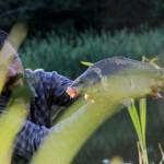 Karpis - labai šauni žuvis